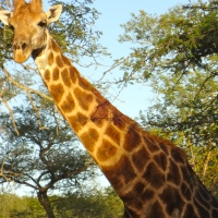 Safari Day 2: Morning Game Drive
