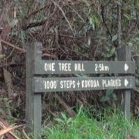 1000 Steps