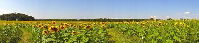 Sunflower https://labtofab.wordpress.com/